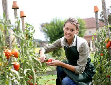 First-time Gardener? Know When to Start